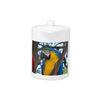 Yellow green and blue tropical Macaw