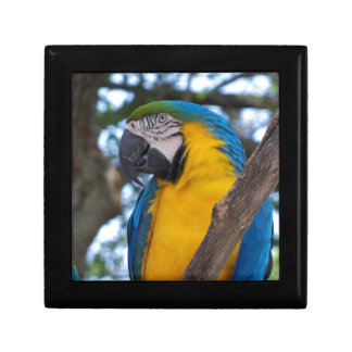 Yellow green and blue tropical Macaw Gift Box