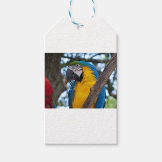 Yellow green and blue tropical Macaw Gift Tags