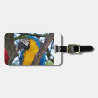 Yellow green and blue tropical Macaw Luggage Tag