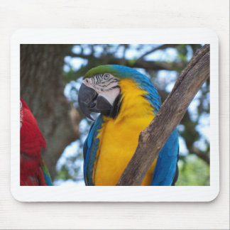Yellow green and blue tropical Macaw Mouse Pad