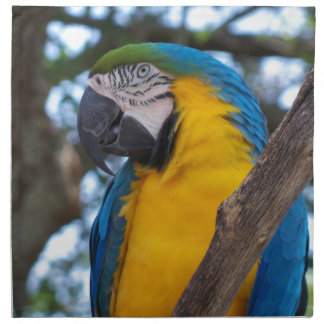 Yellow green and blue tropical Macaw Napkin