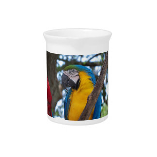 Yellow green and blue tropical Macaw Pitcher