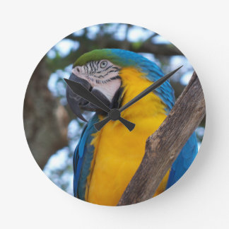 Yellow green and blue tropical Macaw Round Clock
