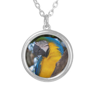 Yellow green and blue tropical Macaw Silver Plated Necklace