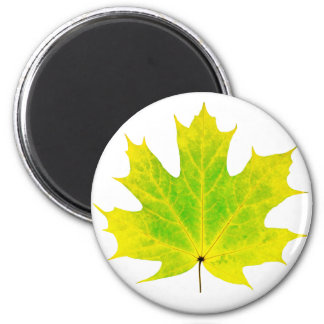 Yellow green maple leaf 2 inch round magnet
