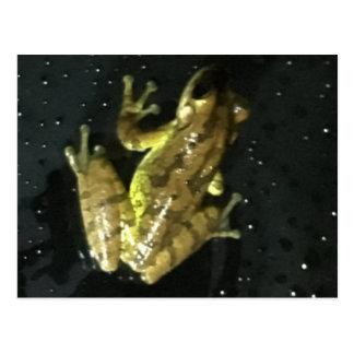 Yellow Green Striped Frog Postcard