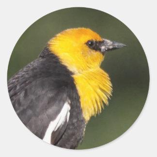 Yellow-Headed Blackbird in the Marsh Round Sticker