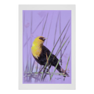 Yellow-Headed Blackbird...Print. Poster