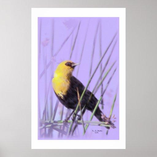 Yellow-Headed Blackbird...Print.