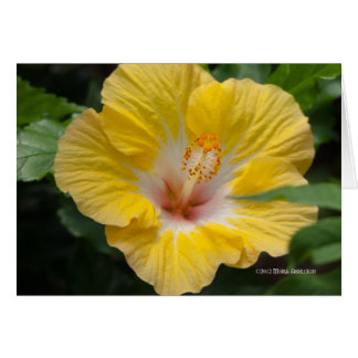 Yellow Hibiscus Bloom Card