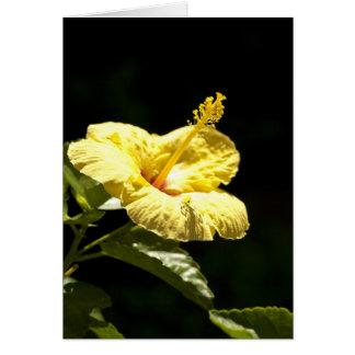 Yellow Hibiscus Card