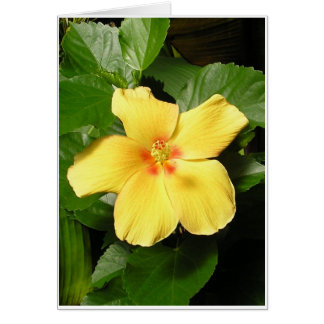 Yellow Hibiscus Card
