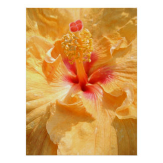 Yellow Hibiscus, detail Poster