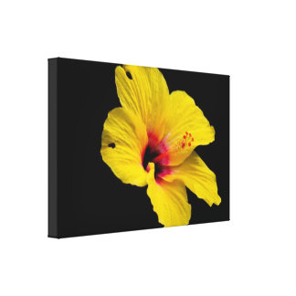 Yellow Hibiscus Flower Modern Black Wall Art