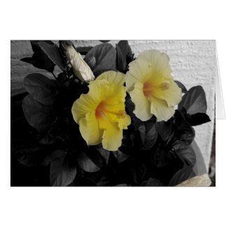 Yellow Hibiscus selective color photo Card