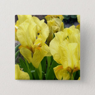 Yellow Iris flowers 2 Inch Square Button