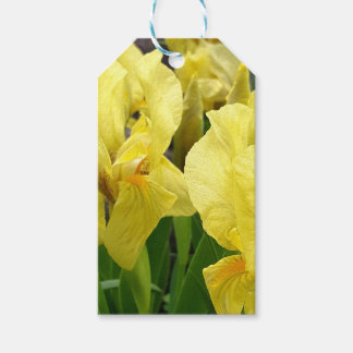 Yellow Iris flowers Gift Tags