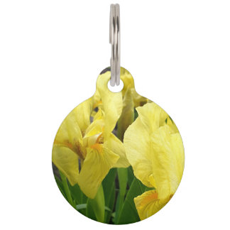 Yellow Iris flowers Pet Tag