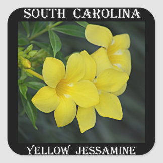 Yellow Jessamine South Carolina Square Sticker
