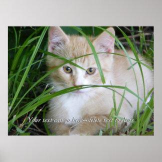 Yellow Kitten in Tall Grass Poster