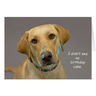 Yellow Lab Birthday Card by Focus for a Cause