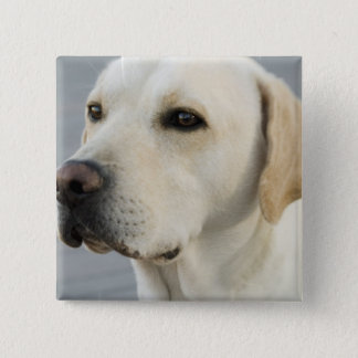 Yellow Lab  Button