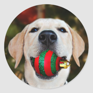Yellow lab Christmas ball Classic Round Sticker