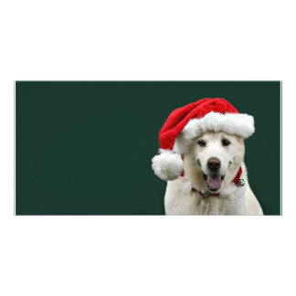 Yellow Lab Christmas Picture Card