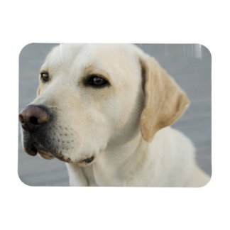Yellow Lab Flexible Magnet