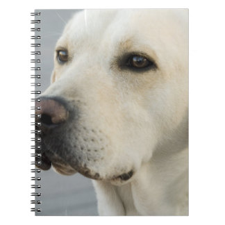 Yellow Lab Notebook