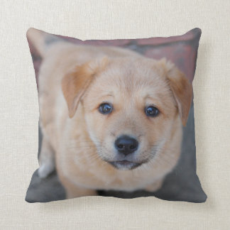 Yellow Lab Puppy Photograph Throw Pillow