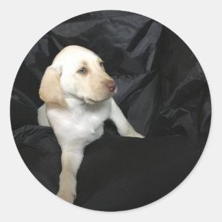 Yellow lab puppy Sadie Classic Round Sticker