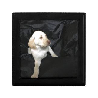 Yellow Lab Puppy Sadie Gift Box