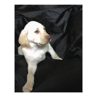 Yellow Lab Puppy Sadie Letterhead