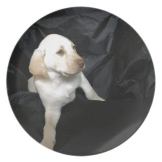 Yellow Lab Puppy Sadie Plate