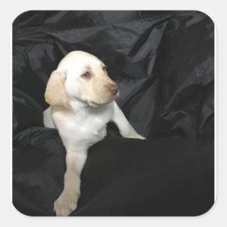 Yellow lab puppy Sadie Square Sticker