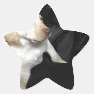Yellow lab puppy Sadie Star Sticker