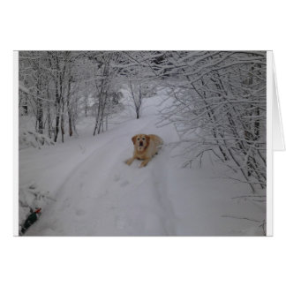 Yellow Lab Relaxing in Fresh Winter Snow Card