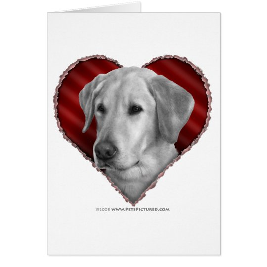 Yellow Lab with Heart Card