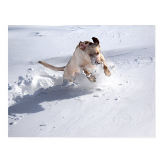 Yellow Labrador in the Snow Postcard