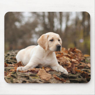 Yellow Labrador Puppy In Autumn Mouse Pad