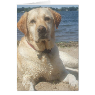 Yellow Labrador Retriever Greeting Card