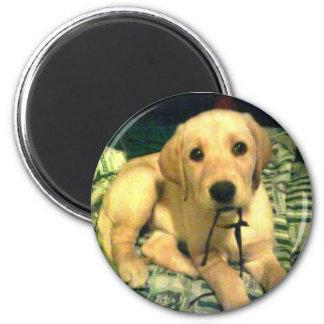 yellow labrador retriever puppy 2 inch round magnet