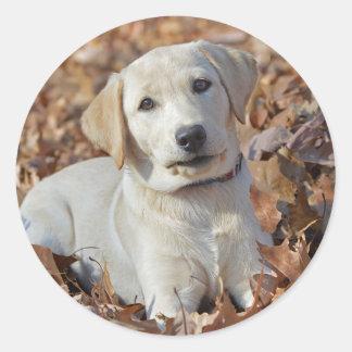 Yellow Labrador Retriever Puppy Classic Round Sticker