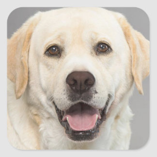 Yellow Labrador Retriever Puppy Dog Sticker