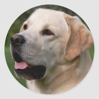 Yellow Labrador Retriever Puppy Dog Sticker / Seal