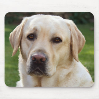 Yellow Labrador Retriever Puppy Dog  - Yellow Lab Mouse Pad