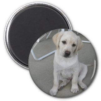 Yellow Labrador Retriever Puppy Magnet