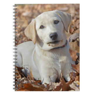 Yellow Labrador Retriever Puppy Notebook